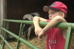 Zach Wott, 11, at his barn with his cattle. Photo Ben French